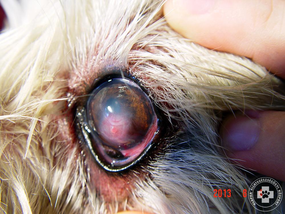 teszteli a jó látást vagy sem hogyan lehet megállítani az életkorral összefüggő látásromlást