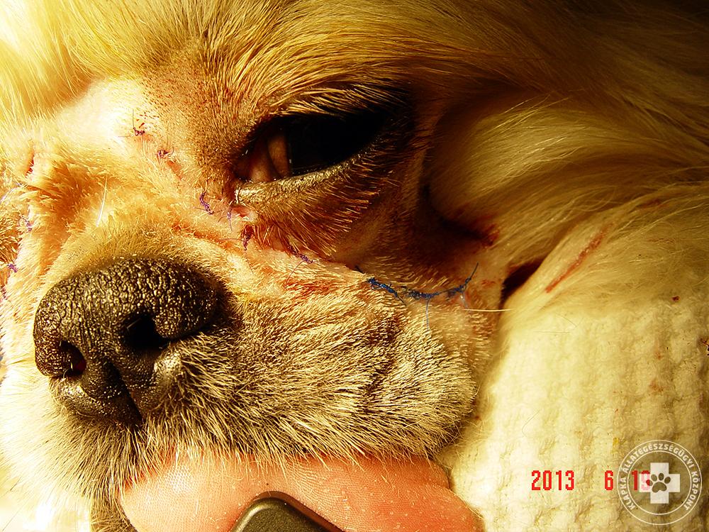 A kutya eltávolítása befolyásolja a látást?